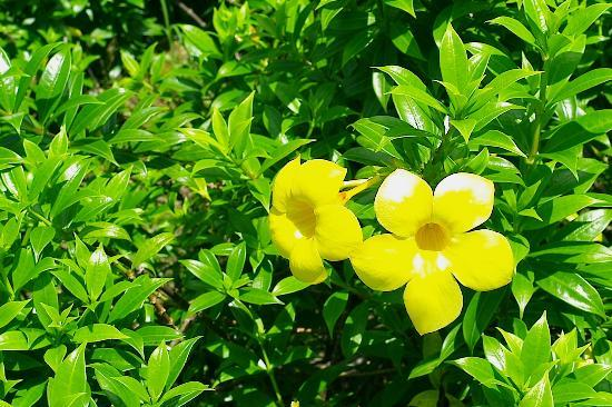 L'esprit de Naiyang Resort: Nature