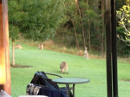 Milton Country Cottages: morning visitors