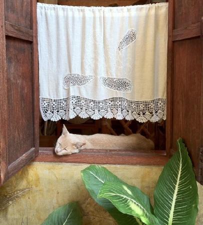 Changmoi House: ikiou, le chat du proprio