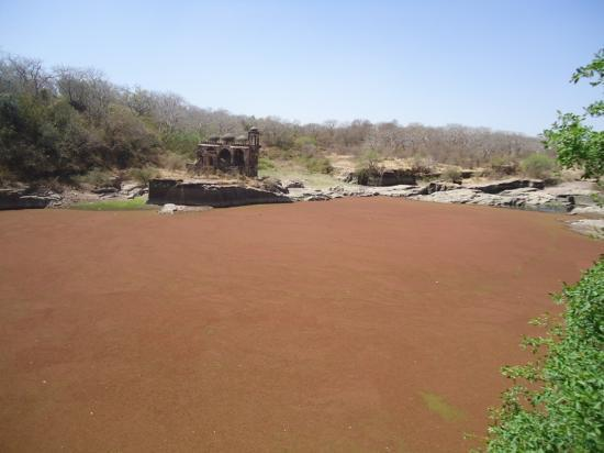 Ranthambore Fort: the pond covered by algae
