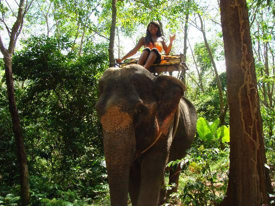 KokChang Safari Elephant Trekking: My first elepant ride :)