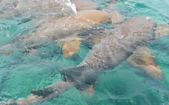 OASI: les dents de lait de la mer