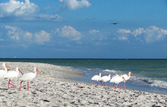 Bowman's Beach: Bowman's Beach, Sanibel Island, FL