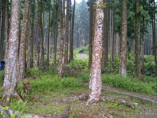 Pancuran 7: Waldweg