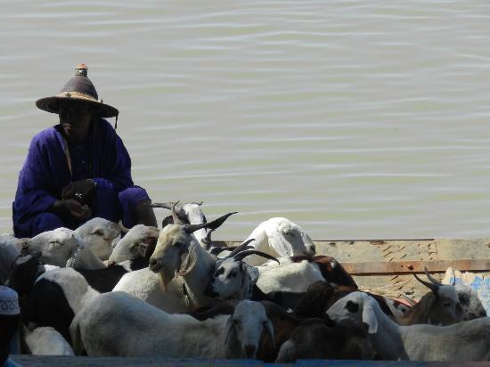 Niger River: Lavorazione del sale - Mopti