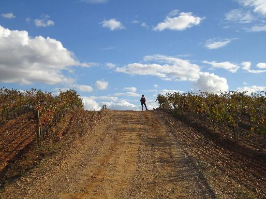 Herdade do Sobroso : wineyards