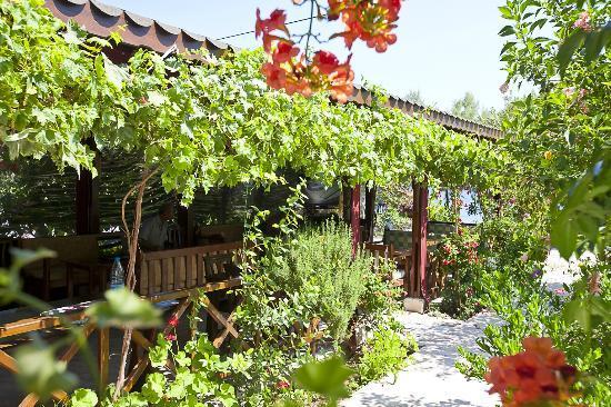 Ada Pansiyon: Bahçe