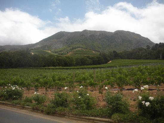 Cactusberry Lodge: Weingut Constantia