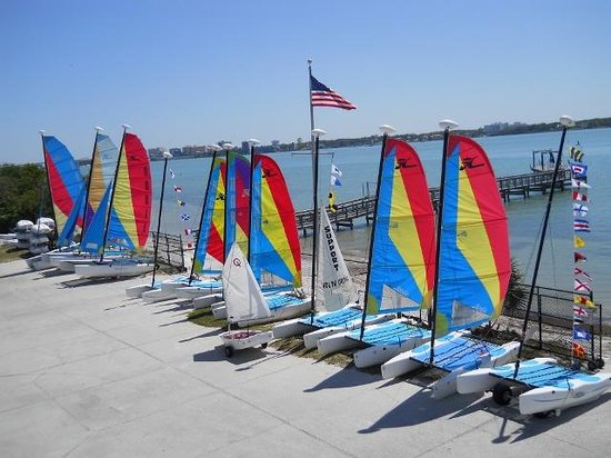 Clearwater Community Sailing Center: Some of the boats to rent.
