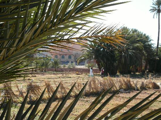 Riad Dar Barbara: Côté palmes