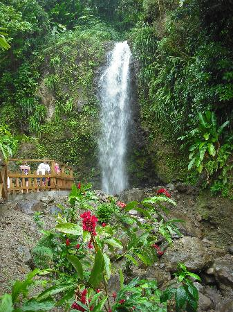 Jungle Tours St. Lucia: Waterfall on St. Lucia