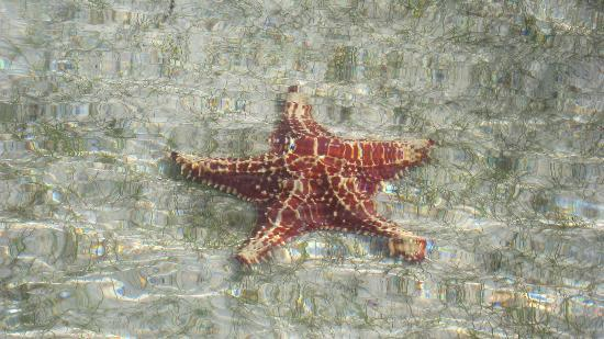 Star Fish Point: Beautiful Creature