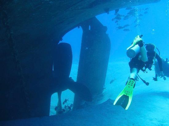 Kittiwake Wreck Dive Foto Di Living The Dream Divers Seven Mile Beach Tr