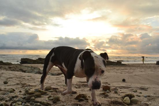 Playa Cielo: No resort is complete without a dog...Meet Weezy! she is amazing.