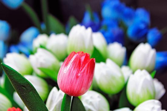 Photo Tours of Amsterdam : tulips at the flowermarket