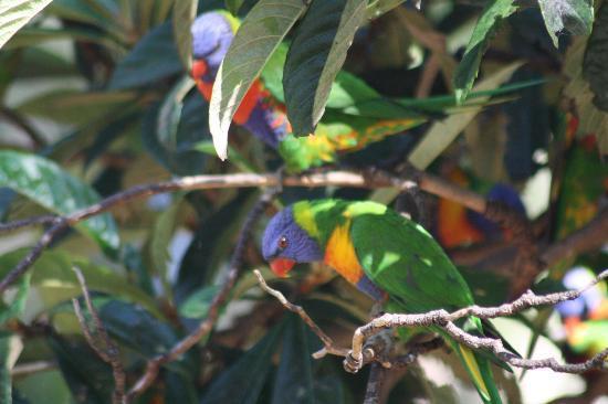Crystal Brook Tourist Park: A few of the birds..