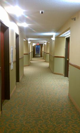 Holiday Inn Express Fenton: Hallway