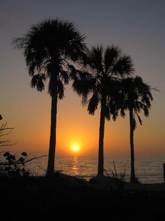 Honeymoon Island State Park: Sunset