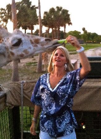 Serengeti Night Safari at Busch Gardens: Feeding a giraffe