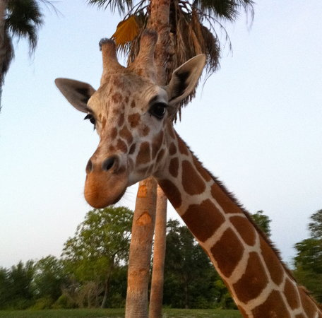 Serengeti Night Safari at Busch Gardens