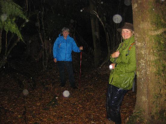 Tarkine Wilderness Lodge: A walk in the rain in the forest