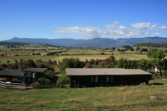 Mole Creek Cabins: View from the sheep paddock with cottages in front