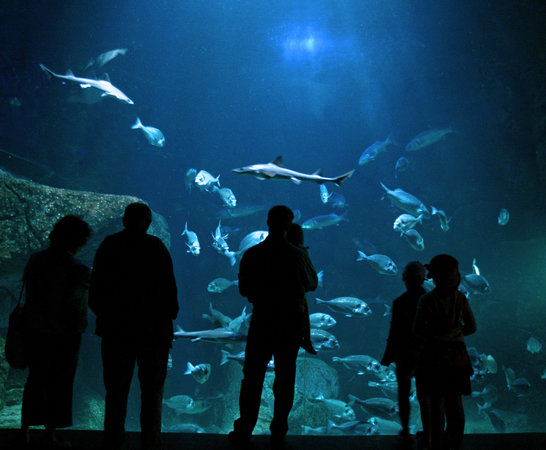 Audierne, France: l'Aquashow, aquariums et spectacle d'oiseaux