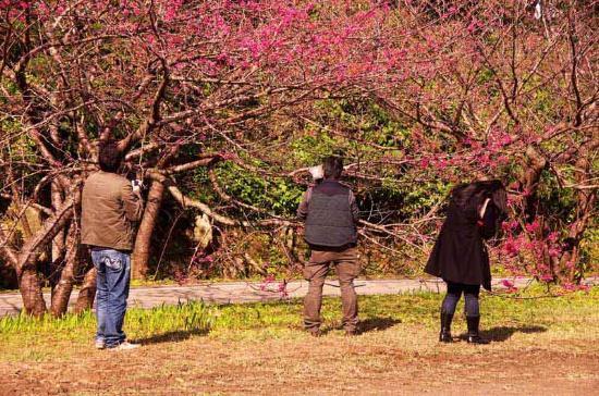 Mt. Yaedake: Photographers Among the Blossoms