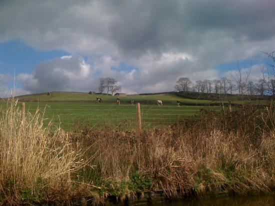 Skipton Boat Trips: Countryside