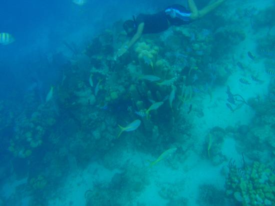 Paradise Island & The Mangroves (Cayo Arena): diving