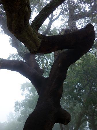 Vilafoia : Cork Oak Study