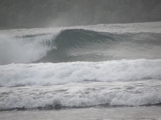 Blue Marlin Resort: Surf