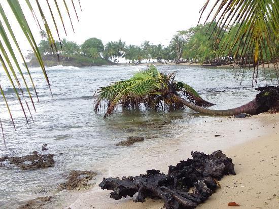 Blue Marlin Resort: paradise