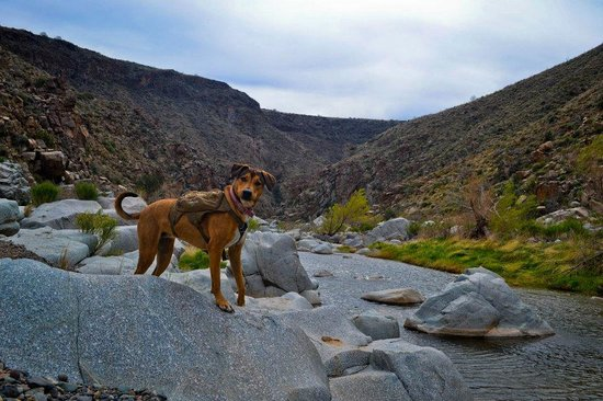 Cordes Lakes, อาริโซน่า: Agua Fria River canyon in Agua Fria National Monument