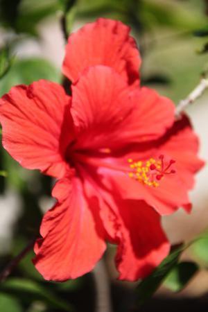 Holiday Isles Resort: Hibiscus