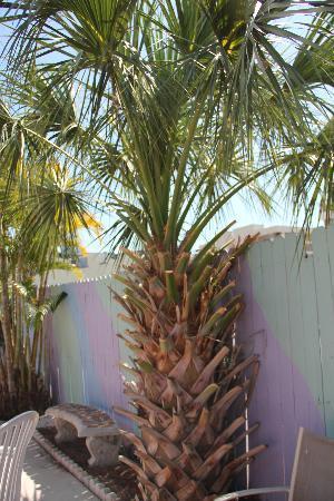 Holiday Isles Resort: palm