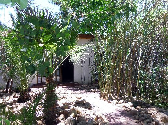 Roof of Africa Hotel: Pretty bamboo garden