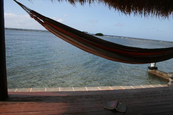 Aruba Reef Beach Apartments: This hammock is there...right now...waiting...