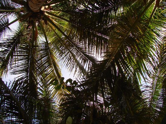 Mr. Busby's Beach Bar: Canopy of palms over the outdoor dining area.