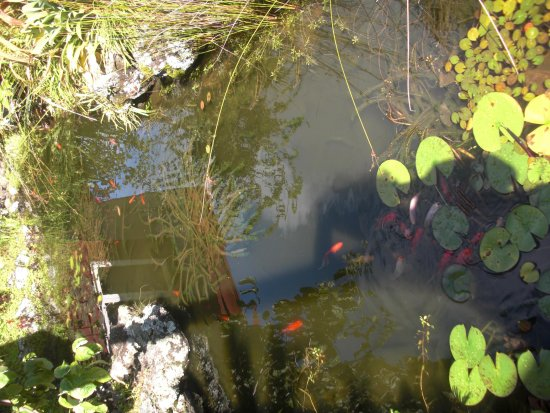 Moon Gate Villa: Fish pond in garden