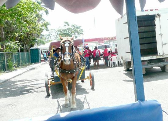 Belize Professional Tour Guides : photo of horse & cart