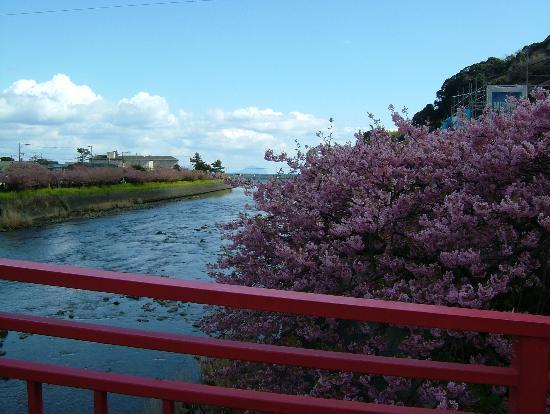 Kawazuhama Onsen: 川沿いに続く桜並木