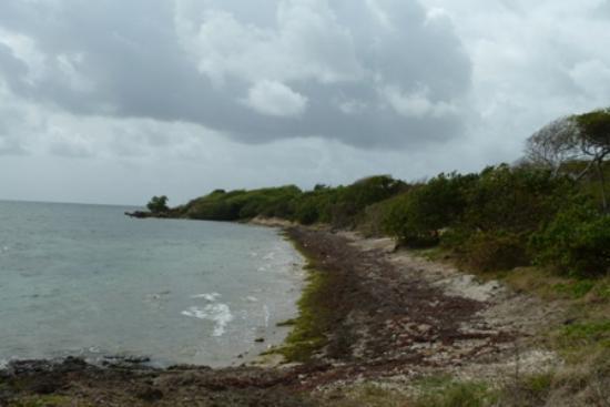 HOTEL CAP MACABOU: La plage...