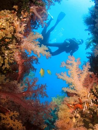 SPAD: South Pacific Adventure Divers: Beqa Lagoon soft corals