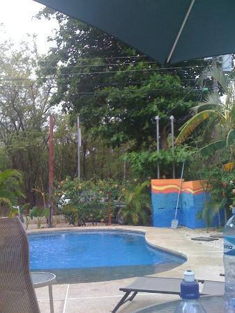 Sugar's Monkey: Everyone loves a pool!