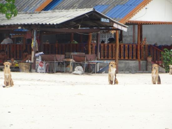 Daya Resort : bbq at daya