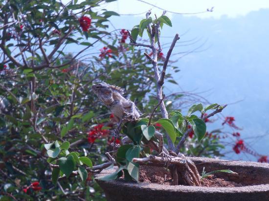 Gem Inn II - Guest House: Besuch im Blumentopf