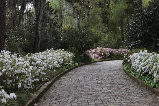 Alfred B. Maclay Gardens State Park : Alfred B. Maclay State Gardens