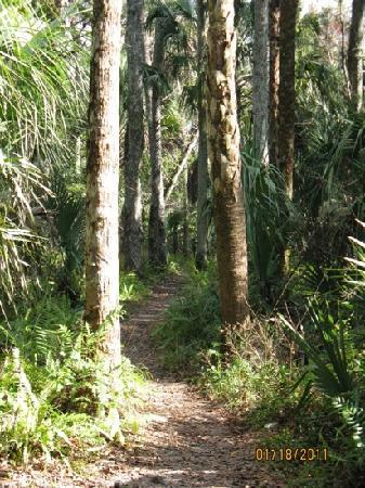 Highlands Hammock State Park: Great trails!