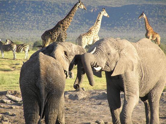 Tuningi Safari Lodge: Down at the waterhole